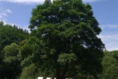 Táborový strom